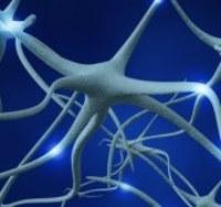 периферические нервы