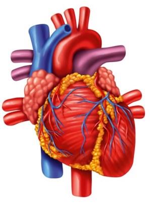 сердце, кардиохирургия в израиле