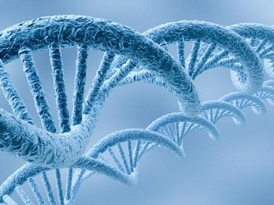 Медицинская генетика в Израиле