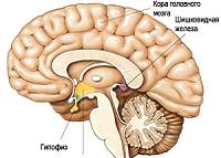Заболевания гипофиза