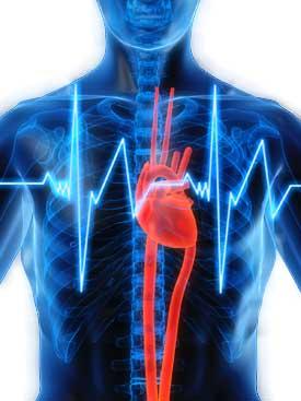 кардиология в израиле, лечение сердца в израиле